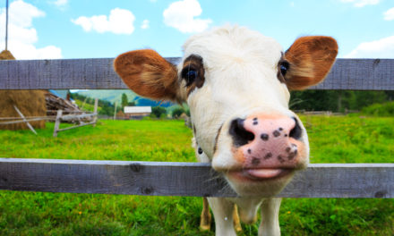 Eat Meat That's Raised and Sourced Sustainably