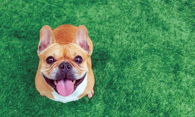 The Astounding Healing Power of Pets